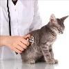 Ветеринарные клиники в Ядрине